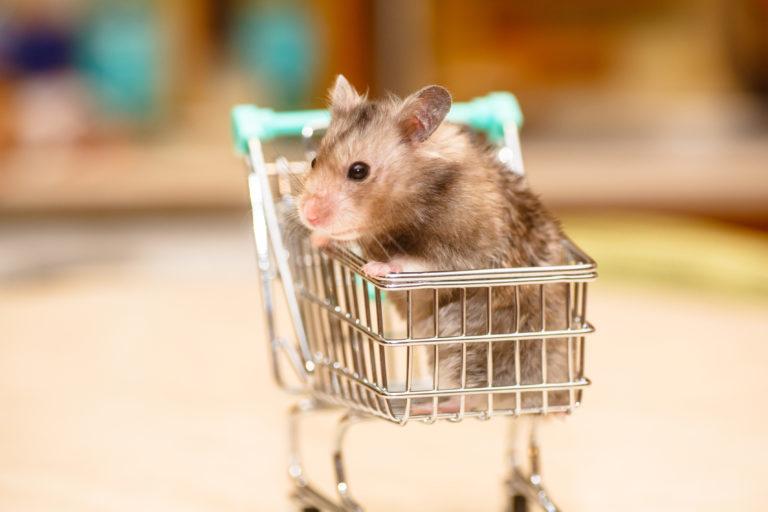 Škrečok nakupy