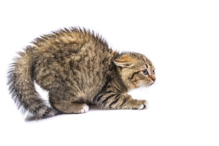 mačky strach