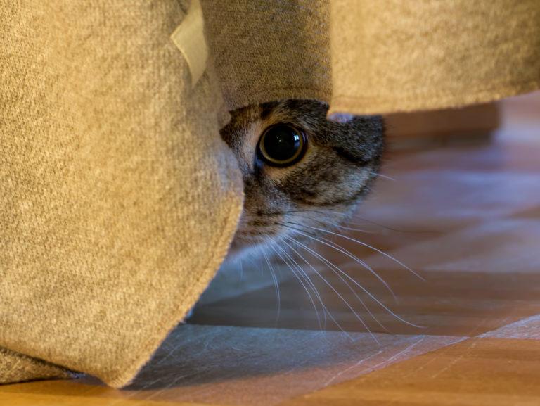 mačka strach