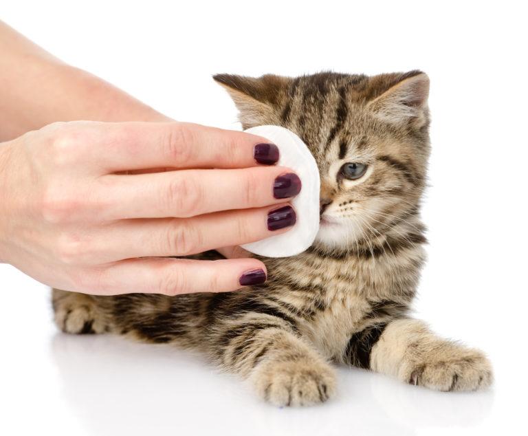 mačka čistenie očí