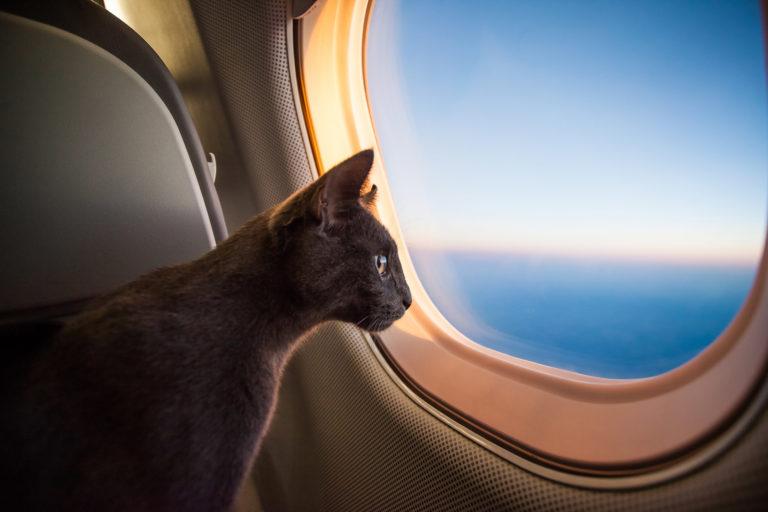 mačka v lietadle