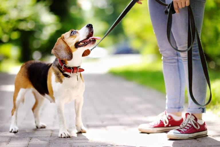 Prechádzka so psom