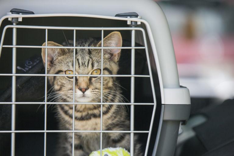 Prepravky pre mačky