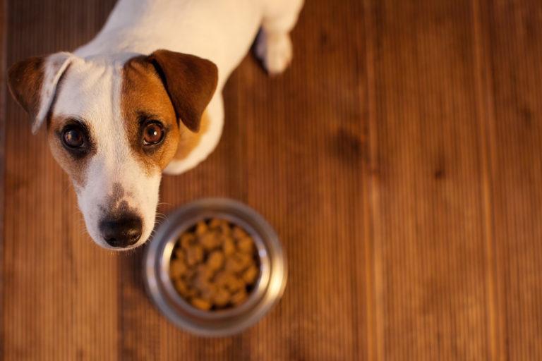 krmivo pre psa