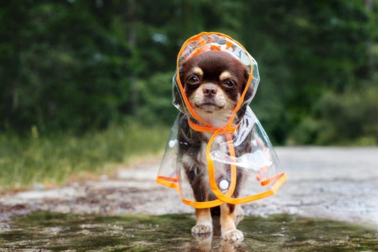 Oblečenie pre psy