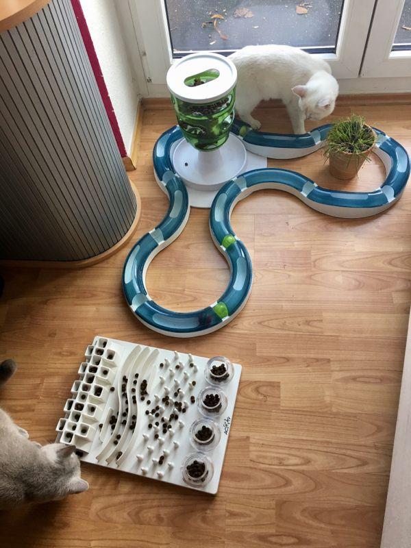 hra pre mačky