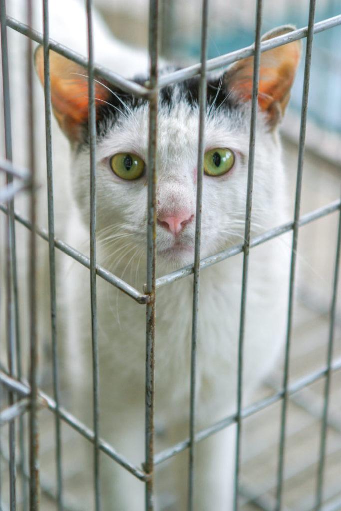 mačka v klietke