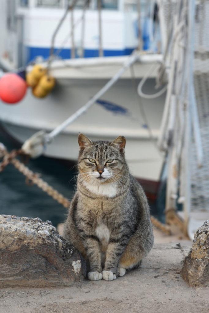 Mačka na lodi