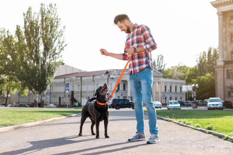 Výcvik šteniatka