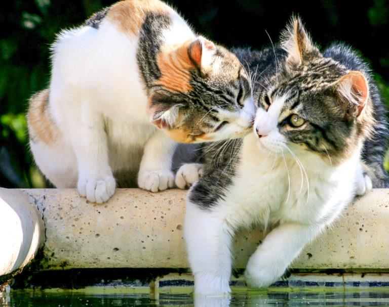dve mačky