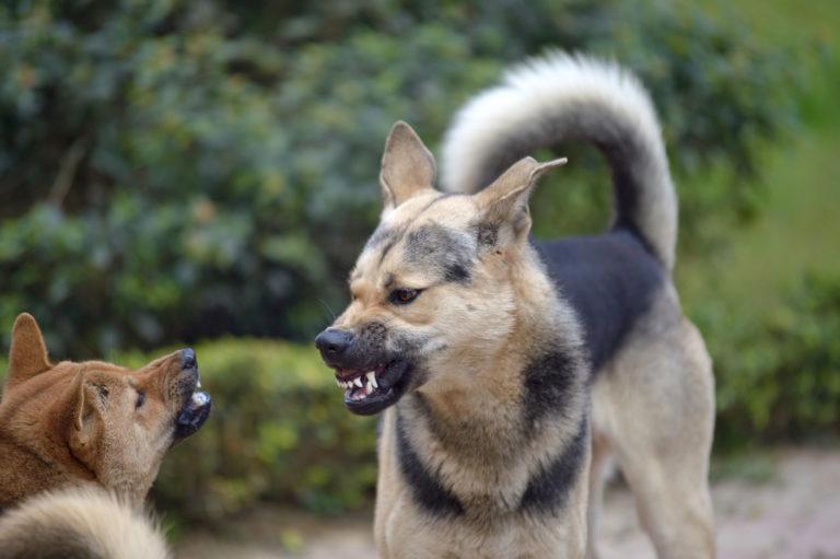 Agresívni pes