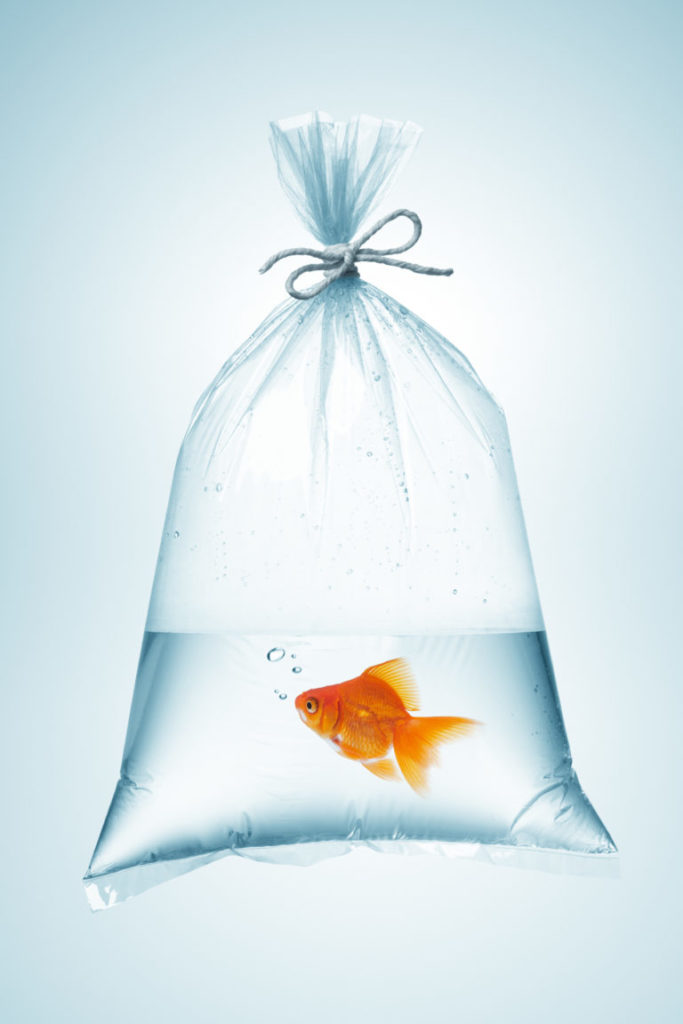 Preprava ryb