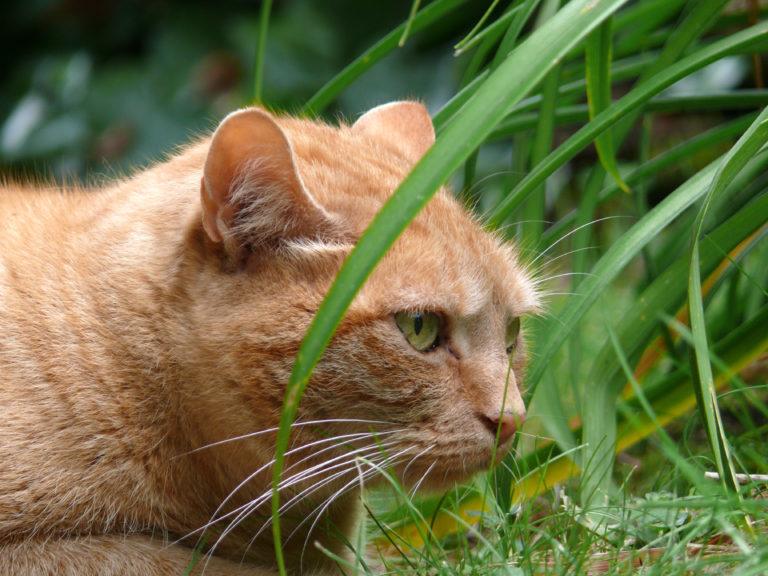 Mačka v tráve