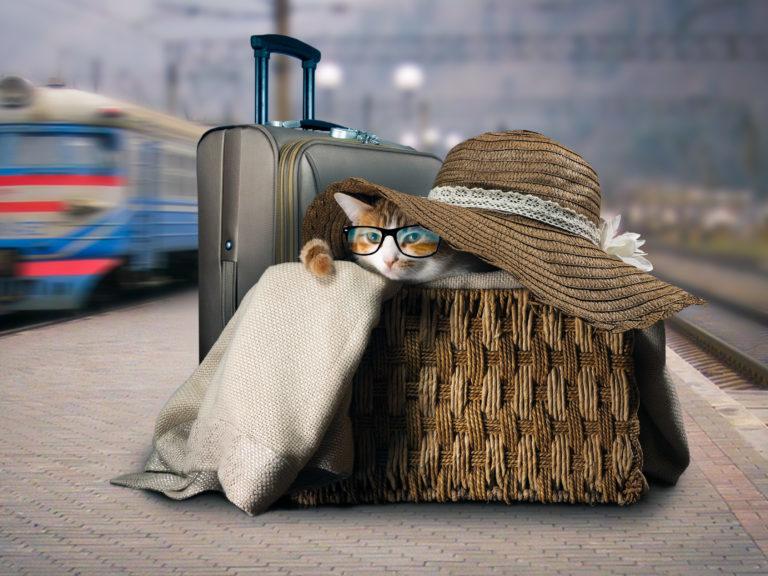 Cestovanie s mačkou