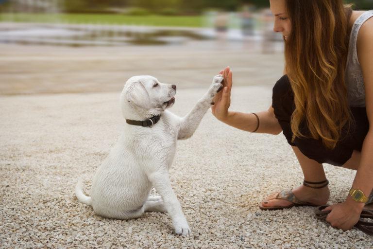Základný výcvik šteniatok - rady a tipy pre chovatelov