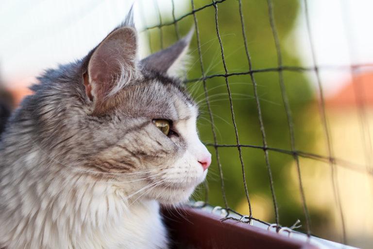 Ochranné siete pre mačky