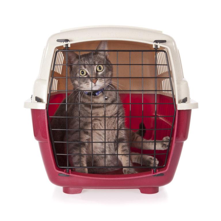 mačka v prepravke