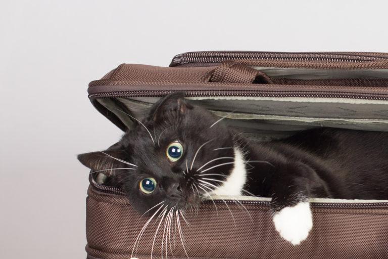 mačka v kufri