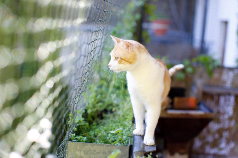 sieť pre mačky