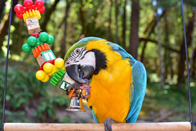 Inteligentné hry pre vtákov