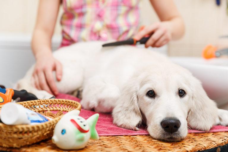 Starostlivosť o psa