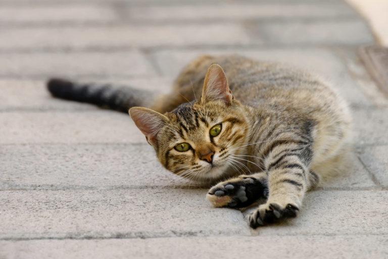 Ruja u mačiek