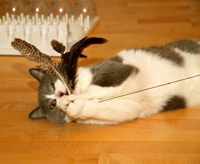 Udice pre mačky