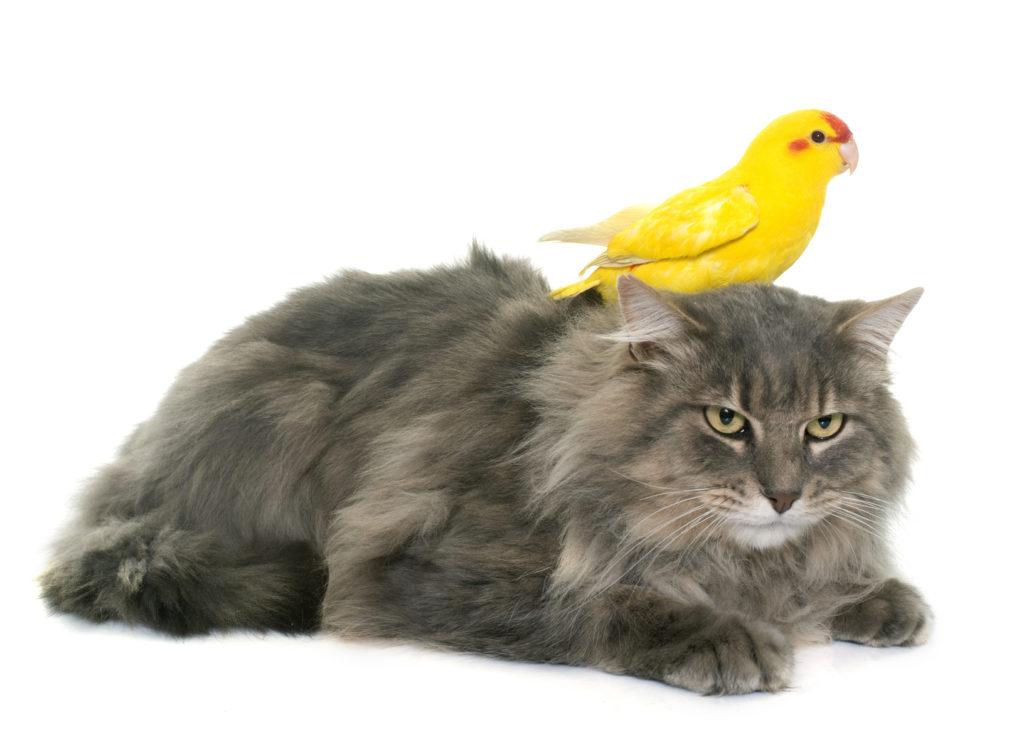 mačka vták