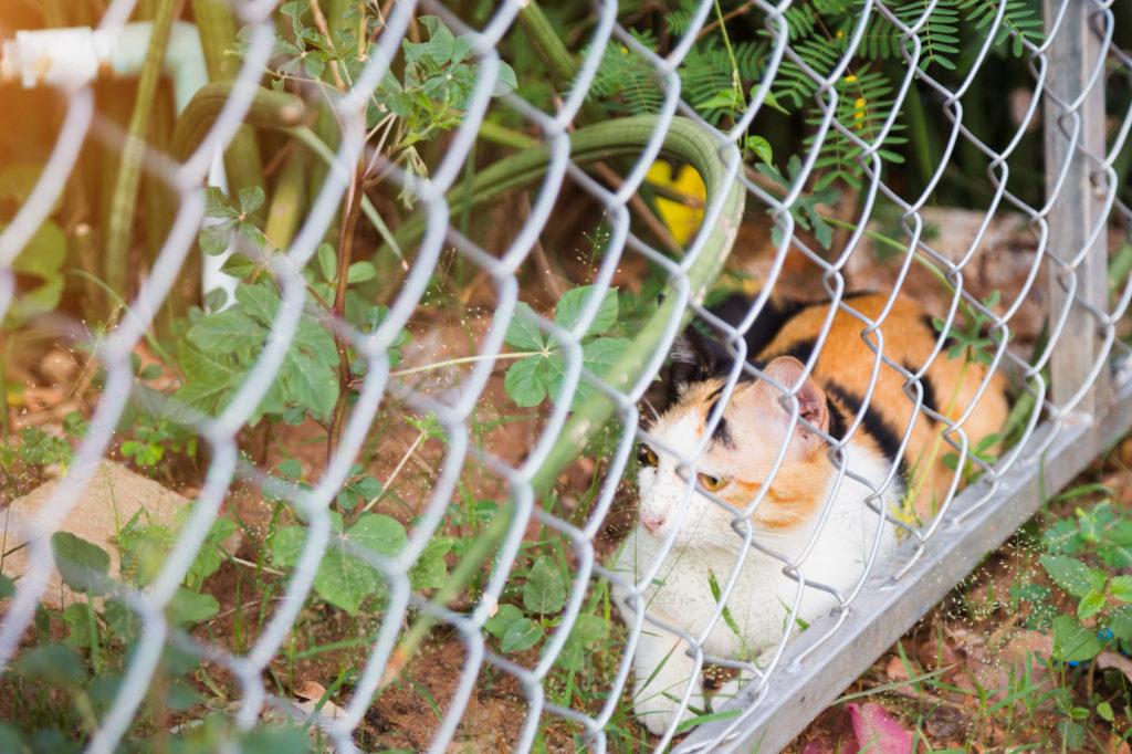 záhrada pre mačky