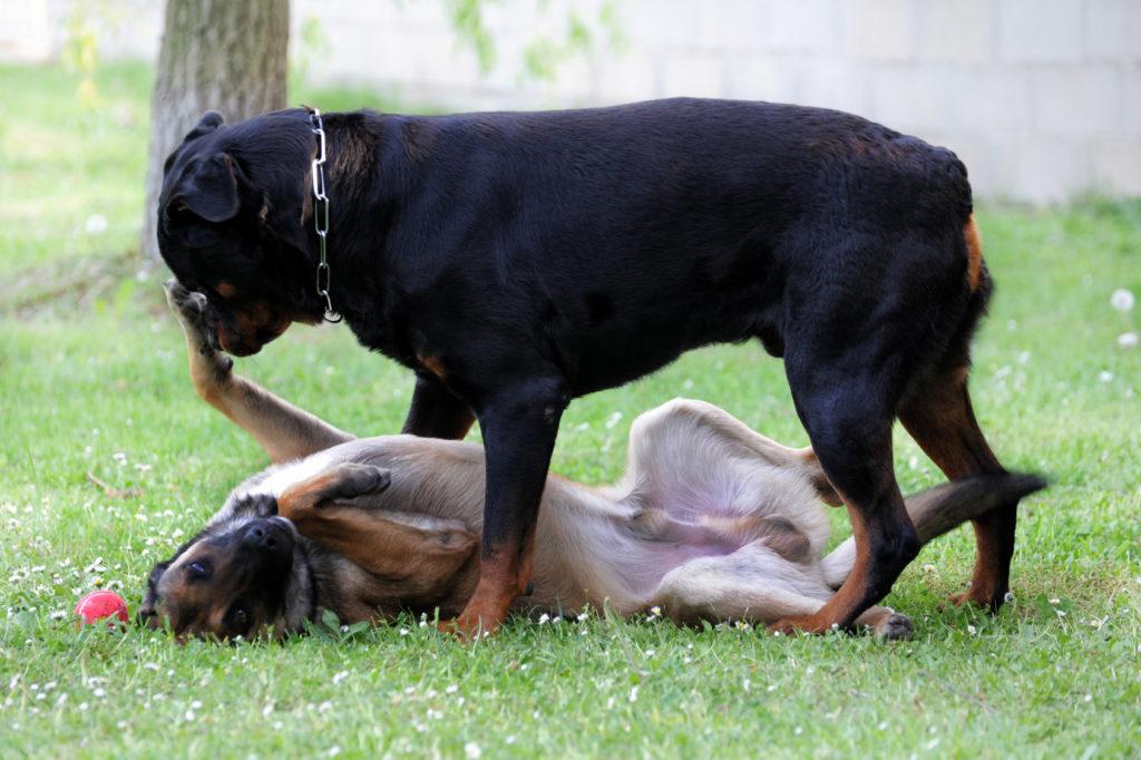 zábava psy
