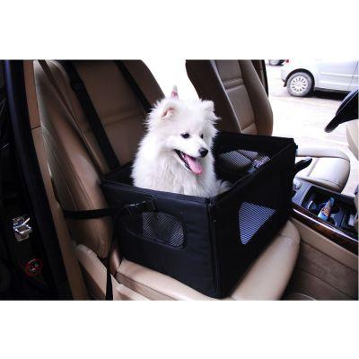jazda autom so psom