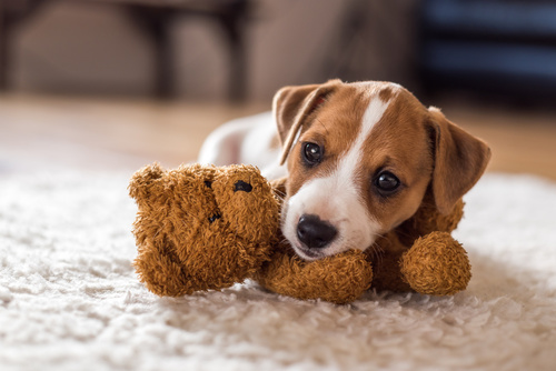 pes hračka