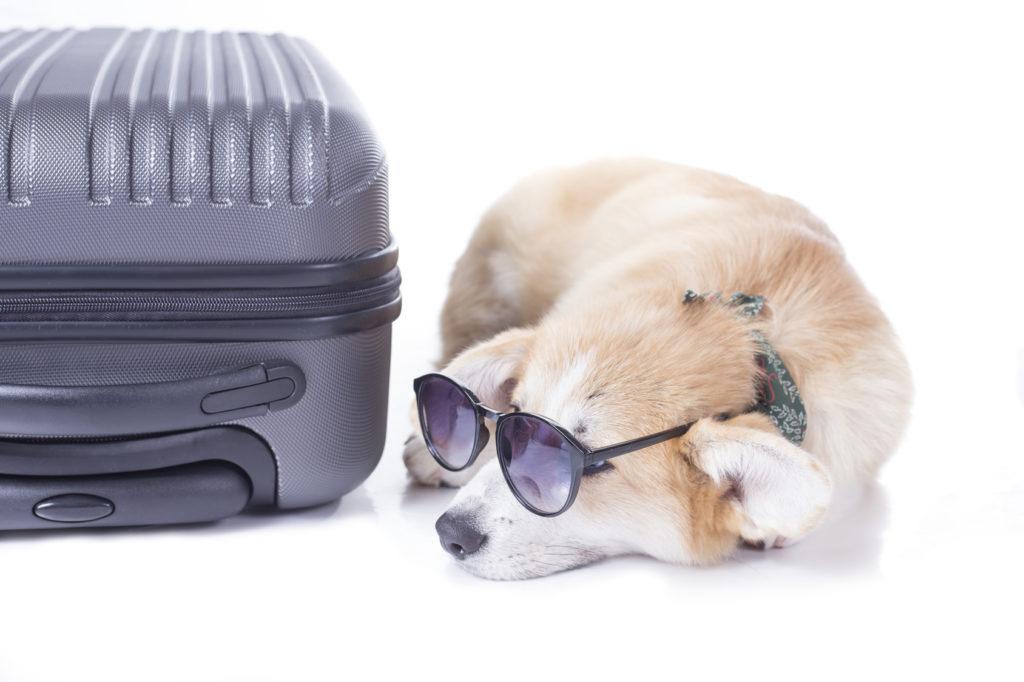 cestovanie pes