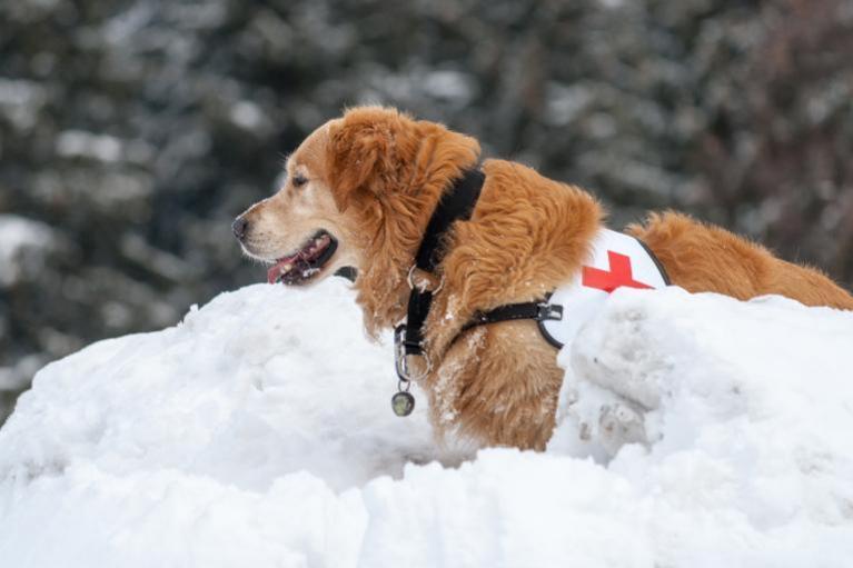 Záchranárski psi