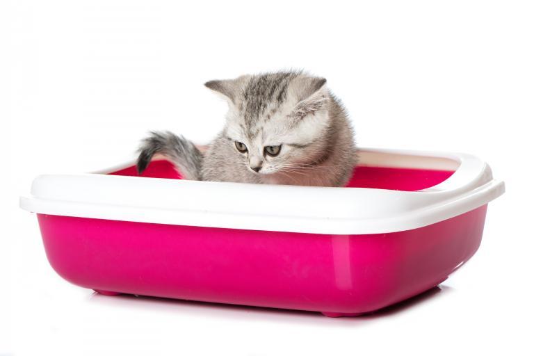 Toaleta pre mačku