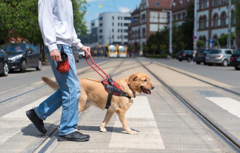 Vodiaci psi pre nevidomých