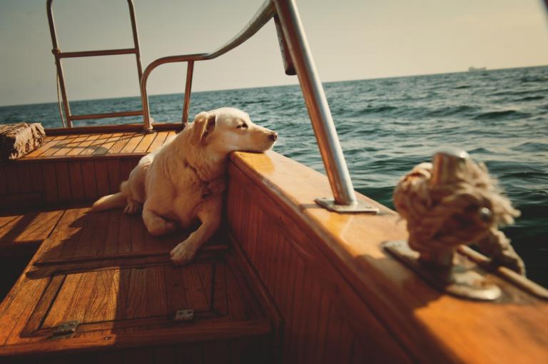 Plavba loďou so psom