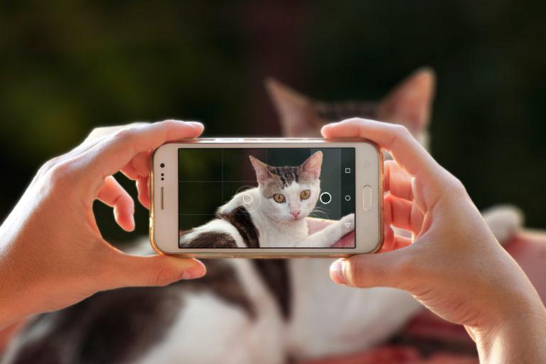 Fotografovanie mačiek mobilem