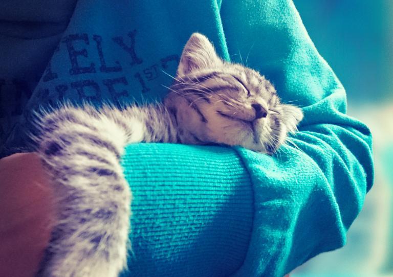 šťastná mačka