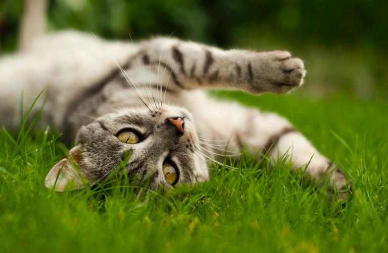 mačka v zahrade
