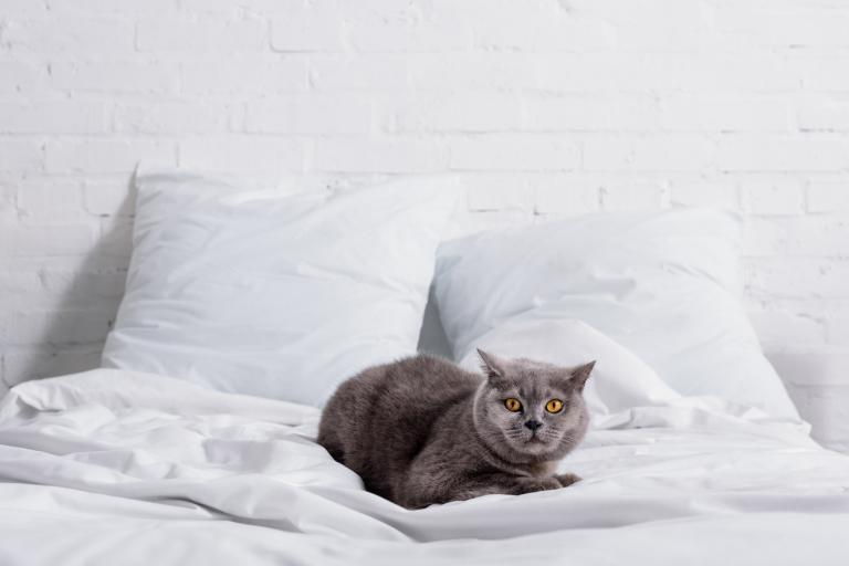 mačka v posteli