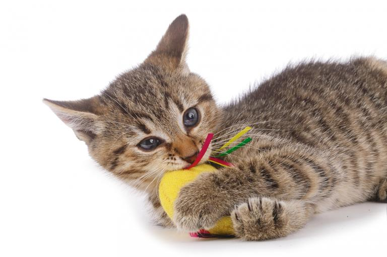 mačka myš