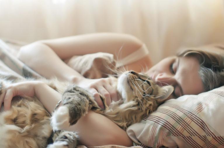 mačka postel