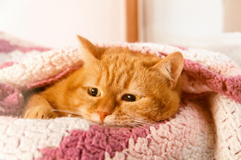 mačka na posteli