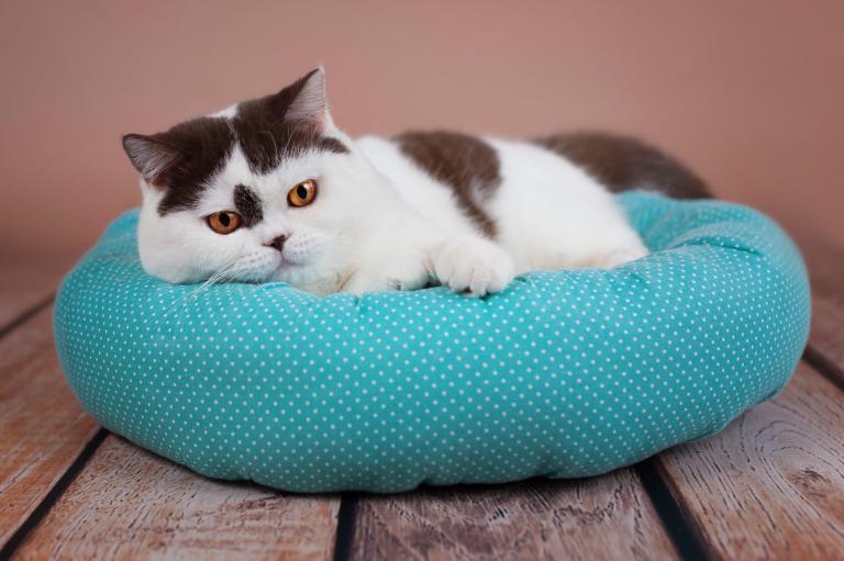 mačka pelech