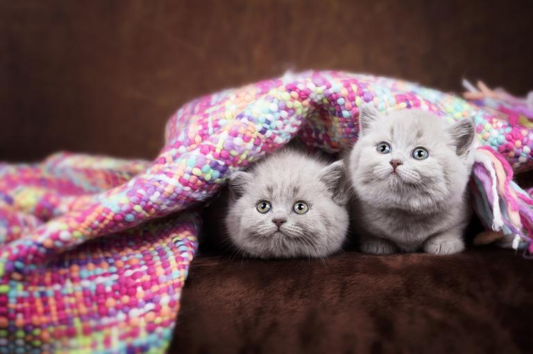 mačiatka pod dekou