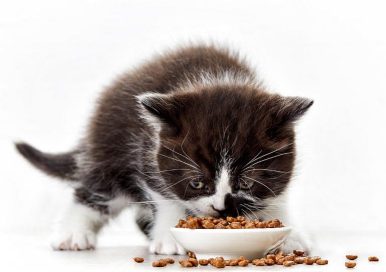 mačka krmivo