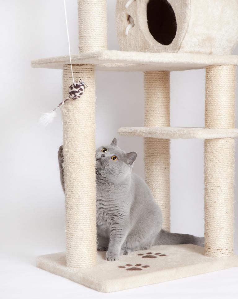 Škrabadlo a mačka
