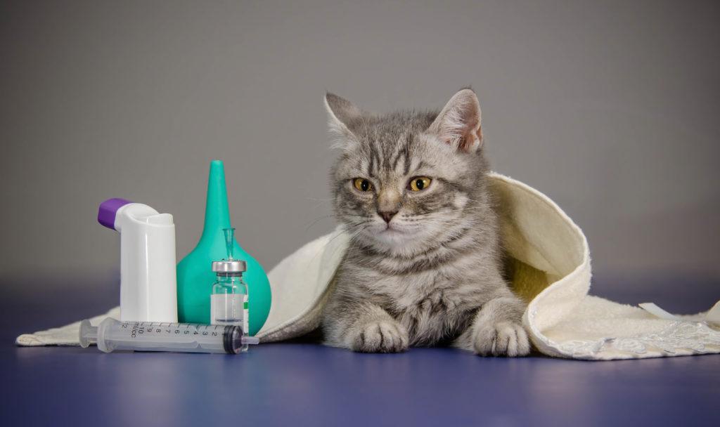 lekárnička pre mačky