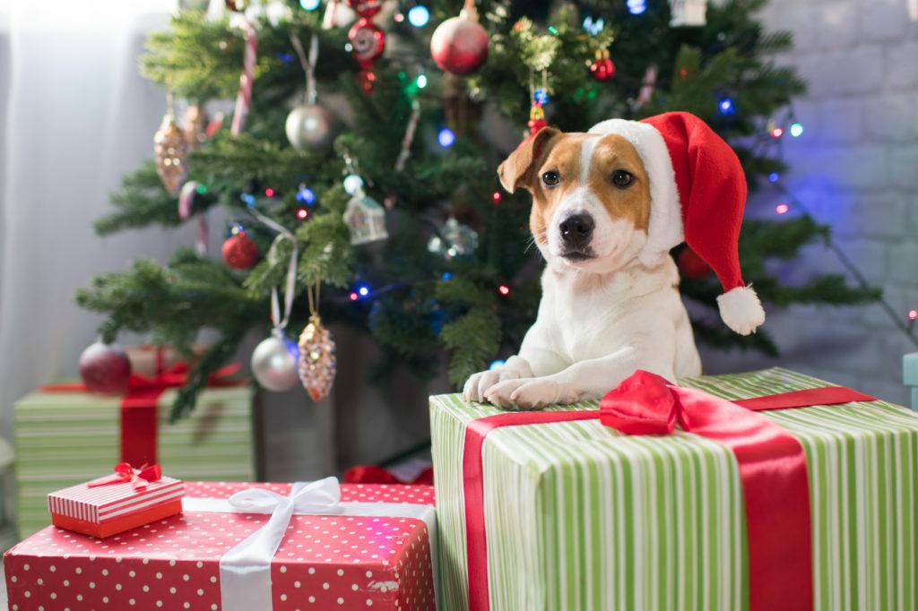 Pes a vianočne darčeky